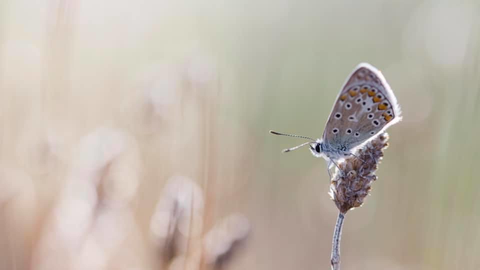 Atelier Focale 16, club photo d'Angoulême Macro d'un papillon, par Virginie CLAUDE