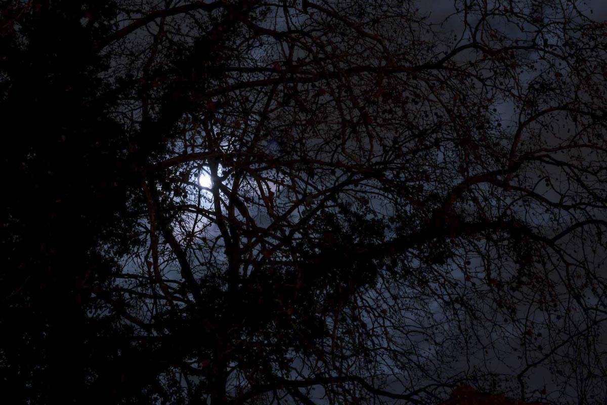 Marie Debitus, concours mensuel décembre 2019, lumière dans la nuit