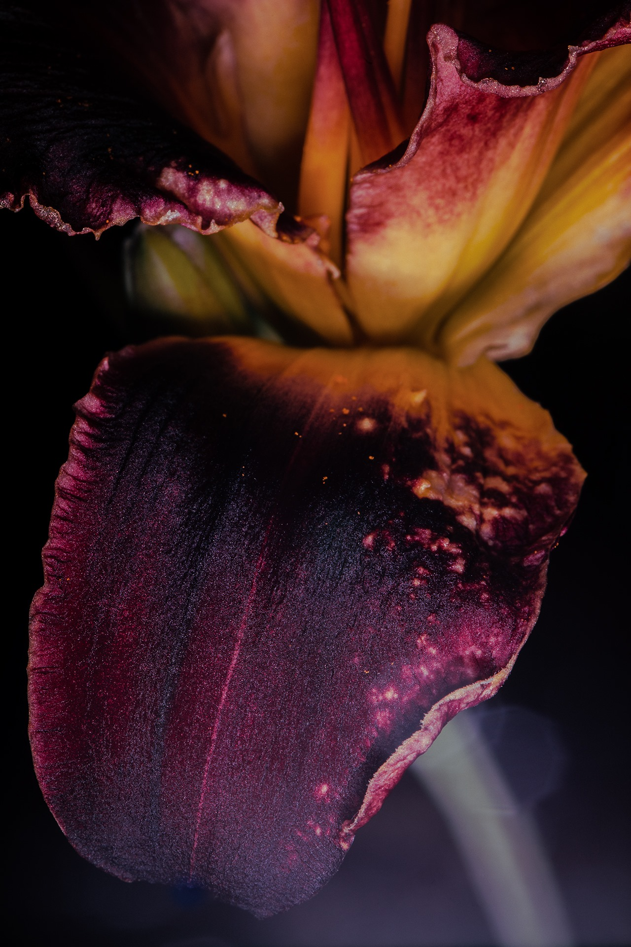 Hemerocallis - Marie Debitus, Atelier Focale 16, exposition photo à l'incontournable