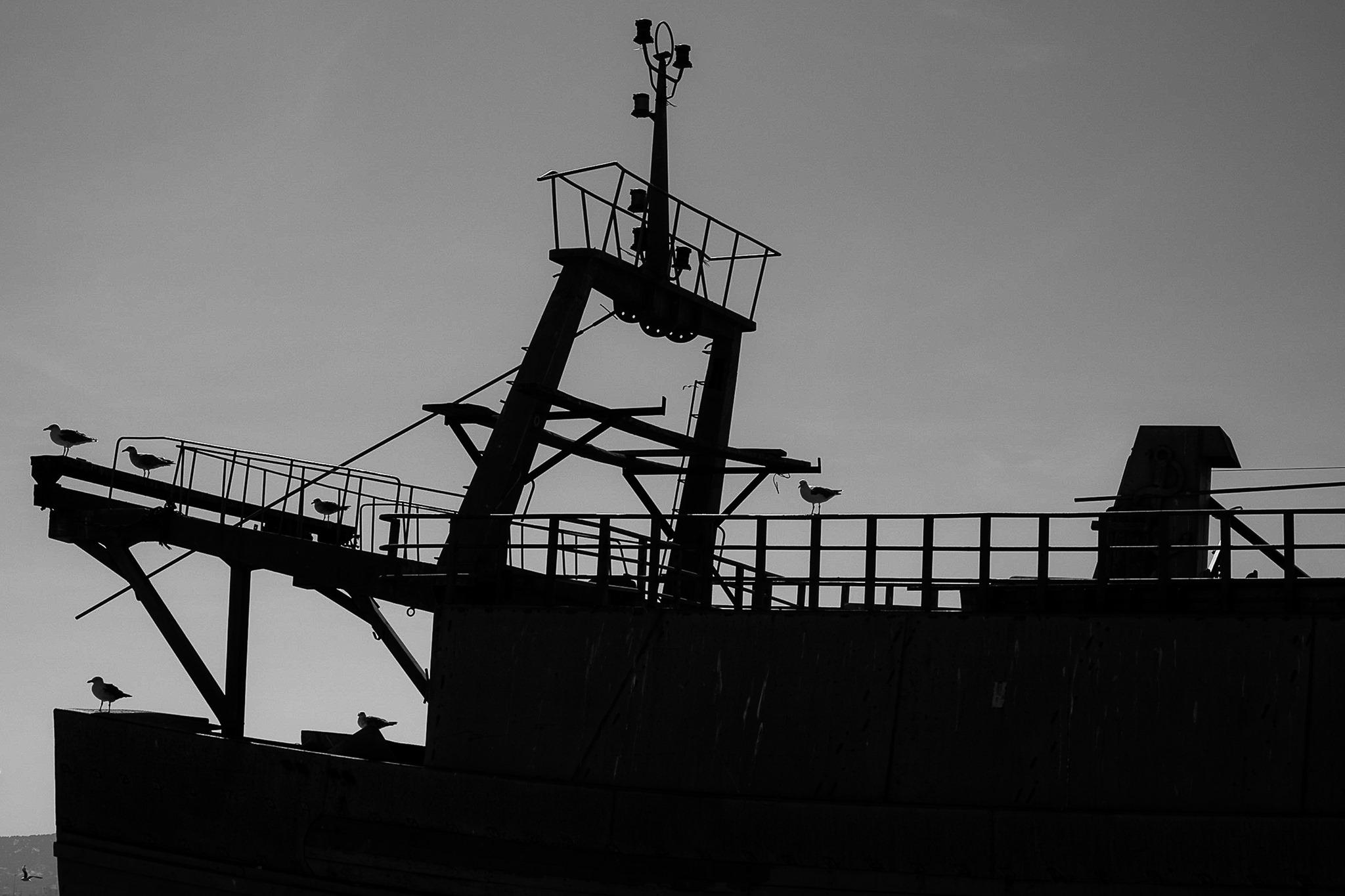 Les mouettes, Corfou, Ile de Grèce, Hubert Borderie, Atelier Focale 16, exposition photo à l'incontournable