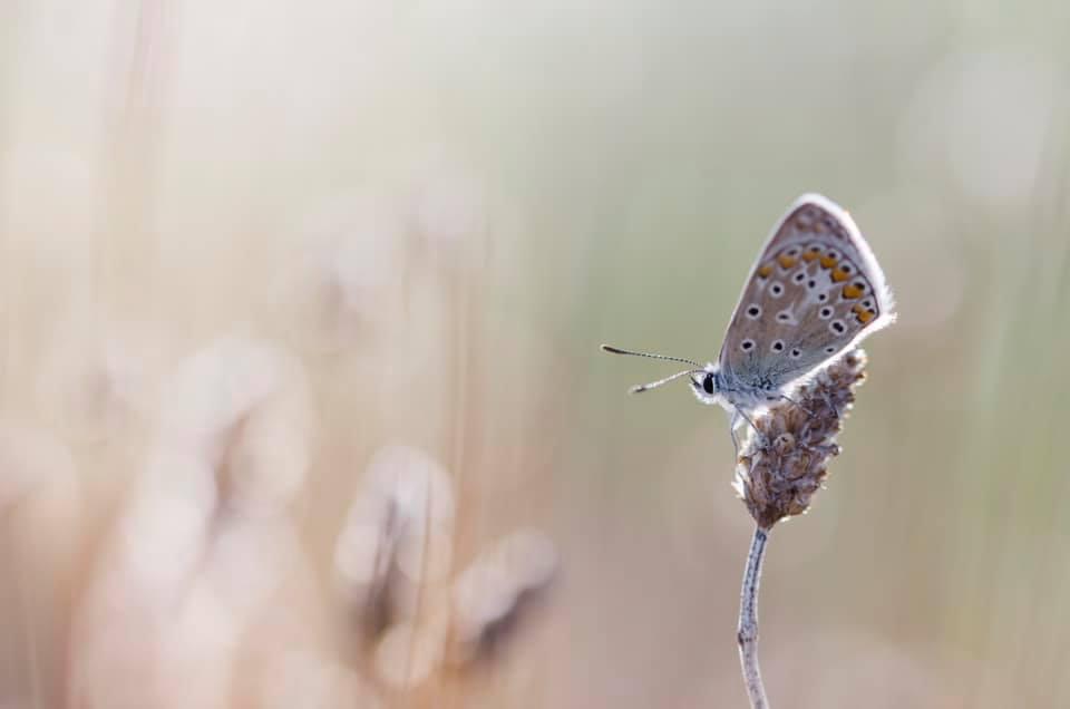 Papillon, Virginie Claude, Atelier Focale 16, Exposition à l'incontournable